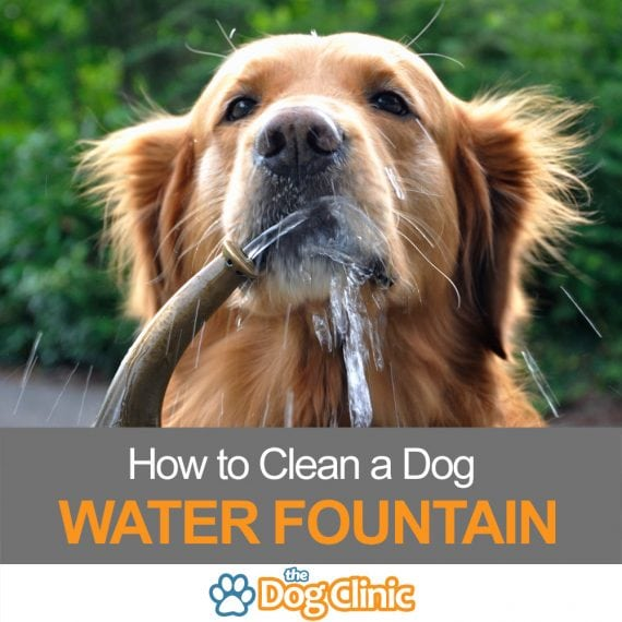 How to Clean a Dog Water Fountain
