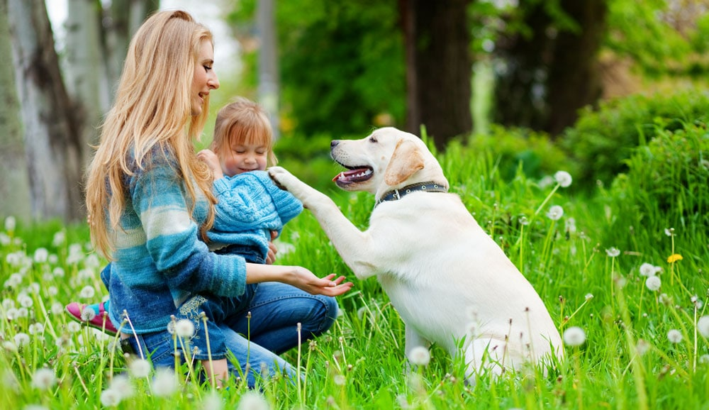 Labrador in woods with child and mother