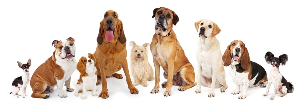 A collection of dog breed sizes