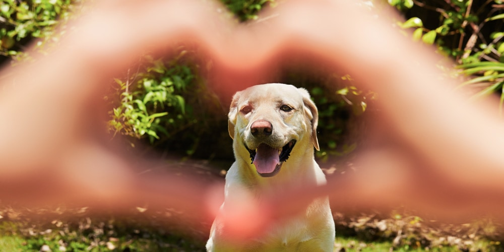 A dog is good for your heart