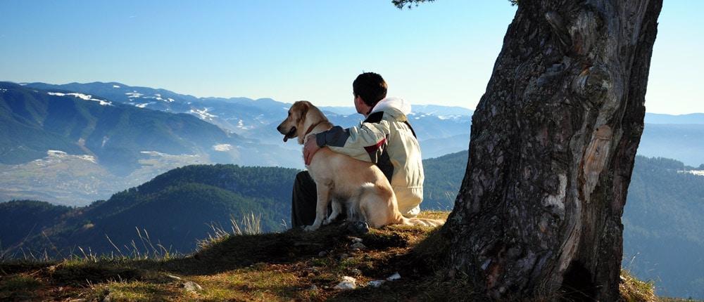 A dog on a mountain