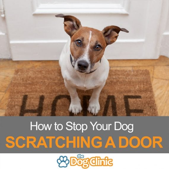 How to stop your dog jumping up and scratching the door
