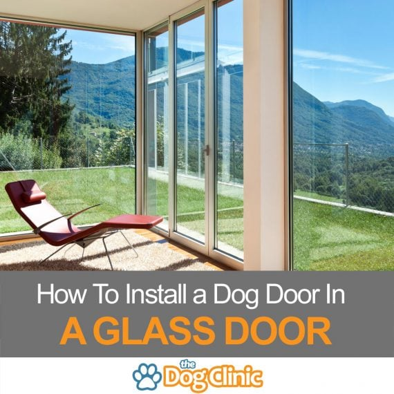 A guide to putting a doggie door in a glass door