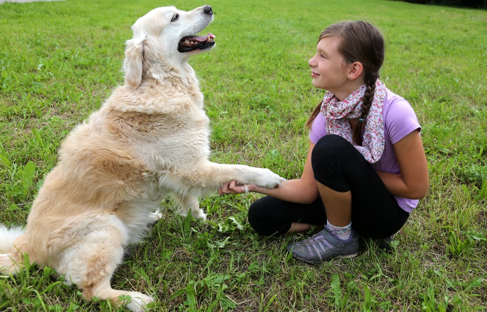Shaking hands with a dog