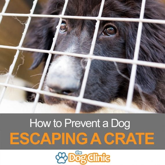 How to prevent a dog escaping his crate