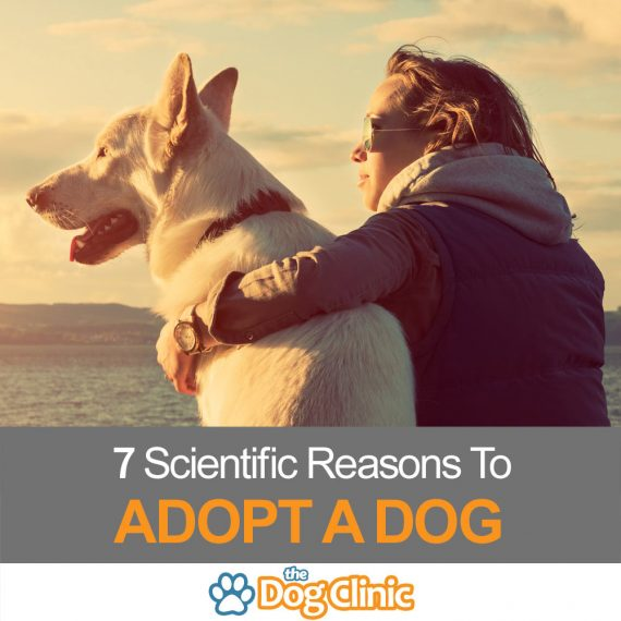 A guide to the benefits of adopting a dog