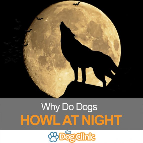 A guide to why dogs howl at night