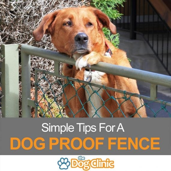 A guide to dog proofing your fence