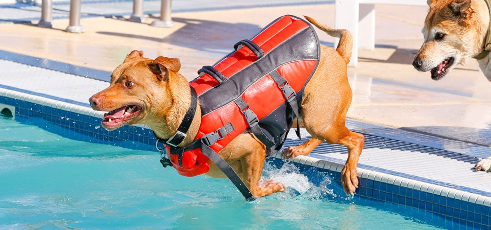 A dog jumping into the pool