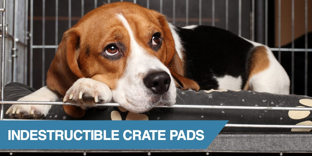 5 Almost Indestructible Crate Pads Tough Amp Chew Proof