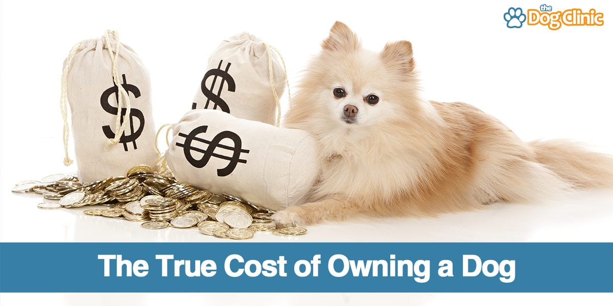 A guide to the cost of owning a dog