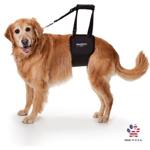 GingerLead Support Harness