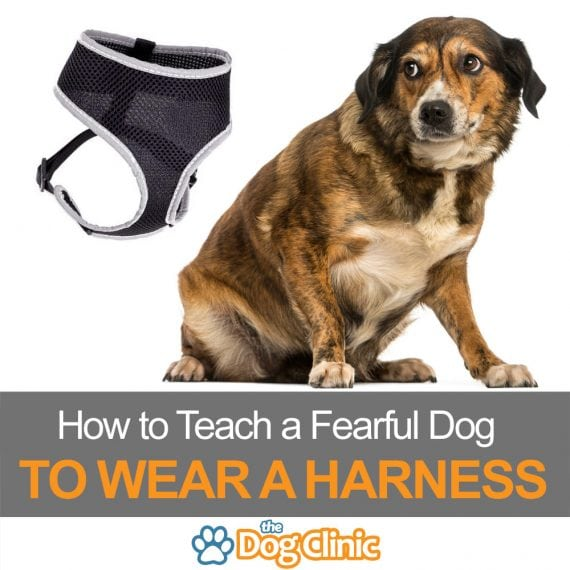 Harness training a fearful dog