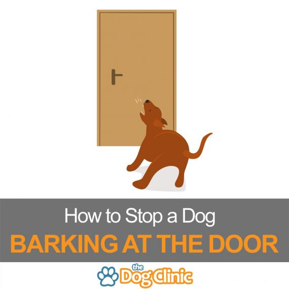 A guide to preventing a dog or puppy barking at the front door