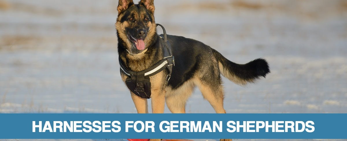 A guide to the best German Shepherd harnesses