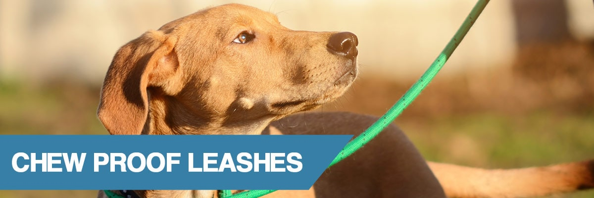 A guide to the best chew proof dog leashes