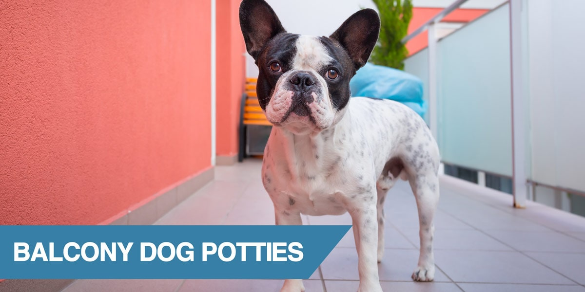 A guide to balcony dog potties