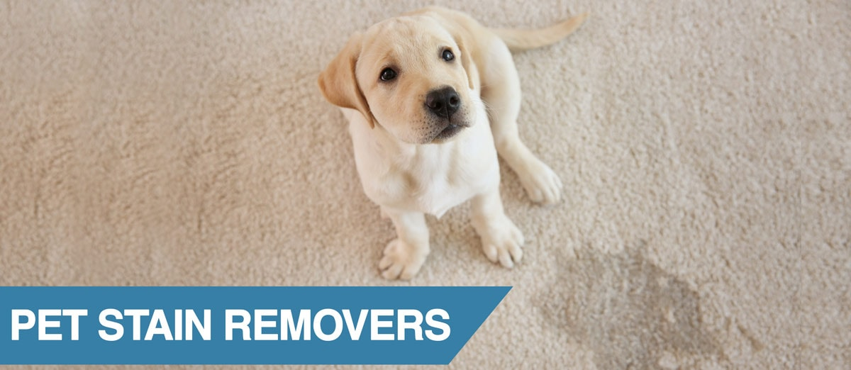 A complete guide to the best pet stain remover for your home