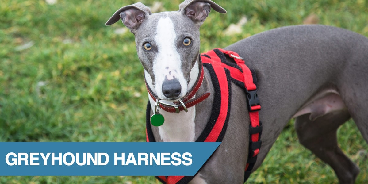 5 Best Harnesses For Greyhounds  2019