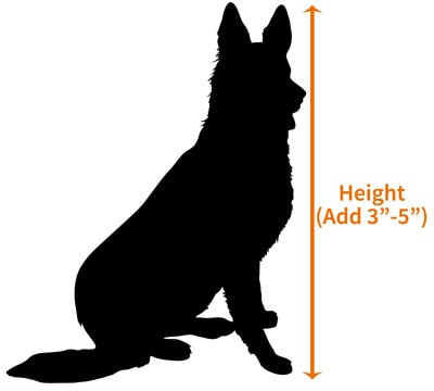 Measuring the height of a German Shepherd for a crate