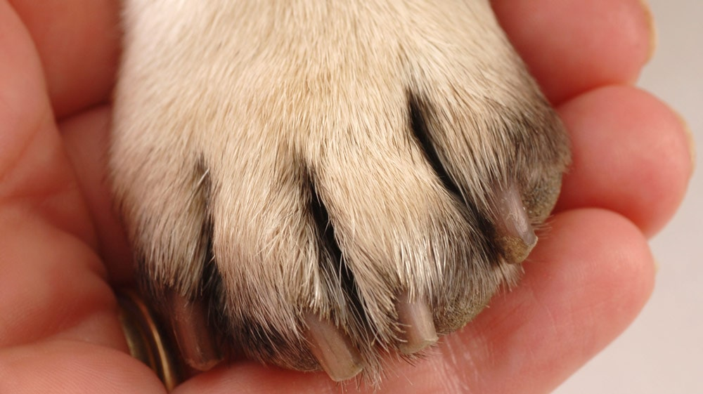 A human holding a dog's paw