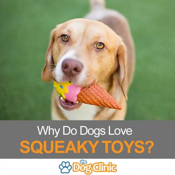 A guide to why dogs love squeaky toys