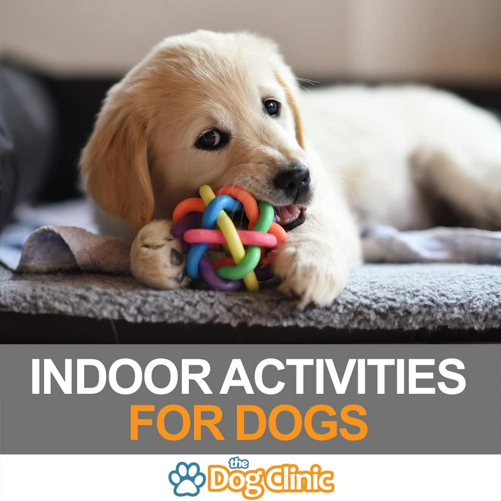 24 of the best indoor activities for dogs