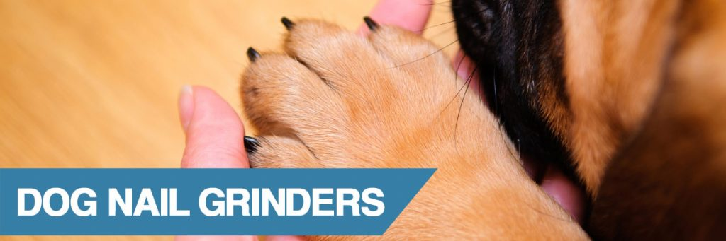 A guide to the best nail grinders for dogs