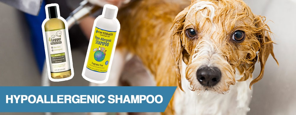 A guide to the best hypoallergenic shampoos for dogs