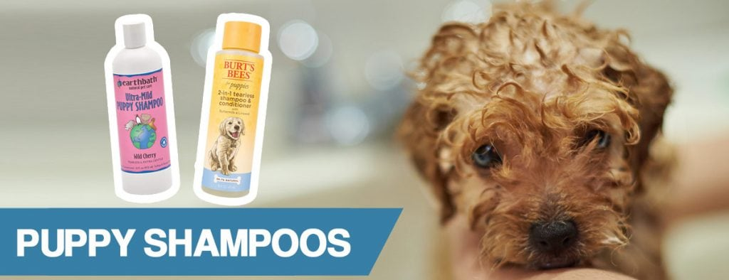 A guide to the best shampoos for puppies