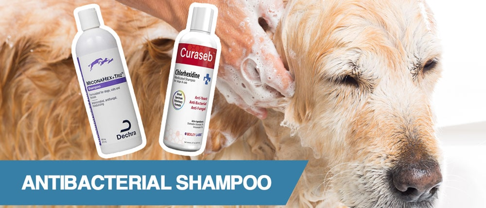 A guide to the best antibacterial shampoos for dogs