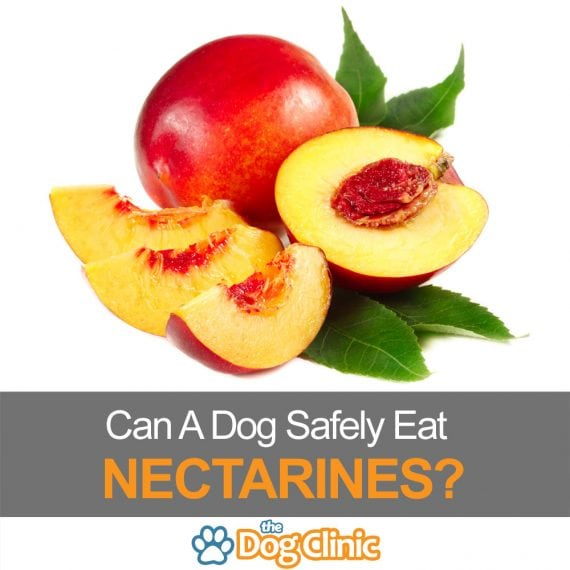 Are nectarines safe for dogs