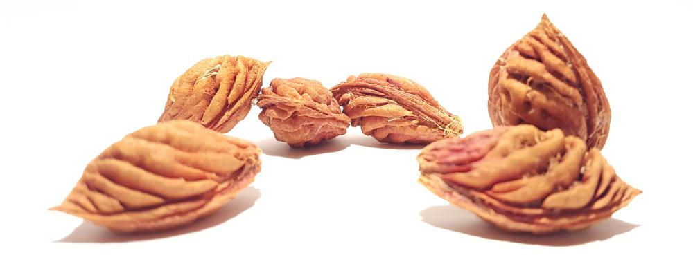 Nectarine pits