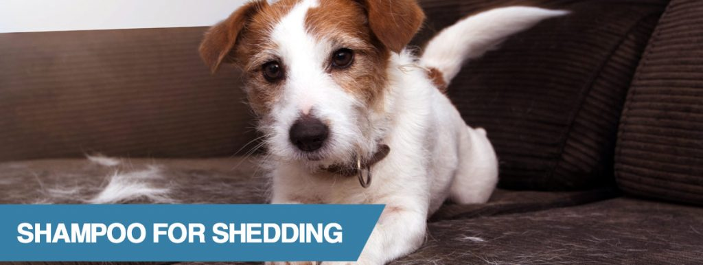 A guide to the best dog shampoo for shedding
