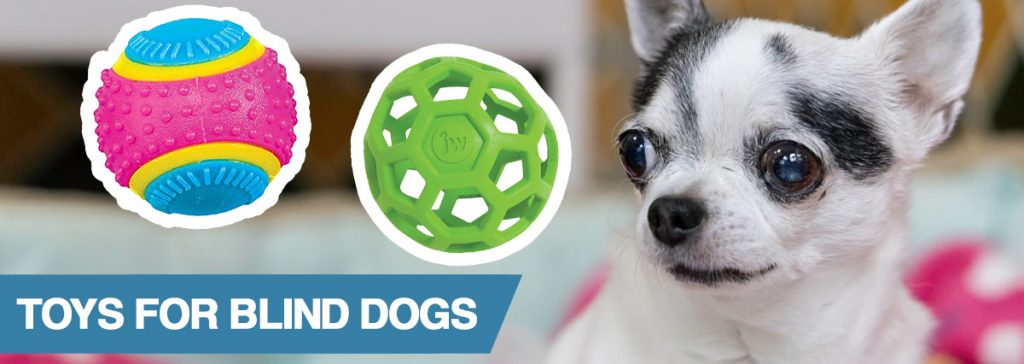 A guide to the best toys for blind dogs