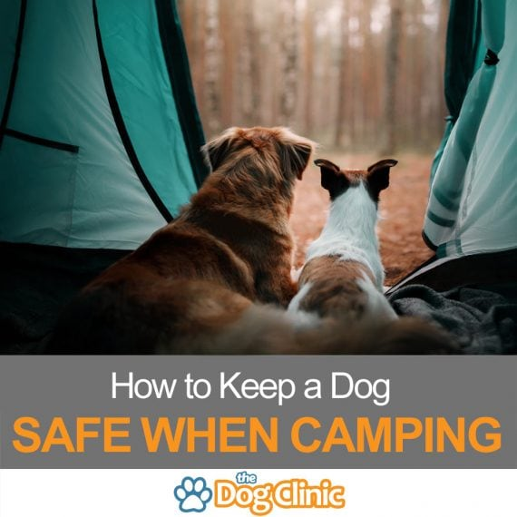A guide to safely camping with dogs