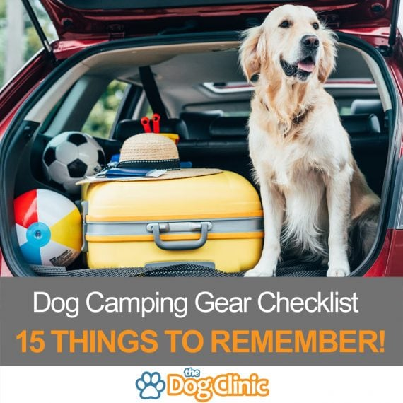 A guide to dog camping gear