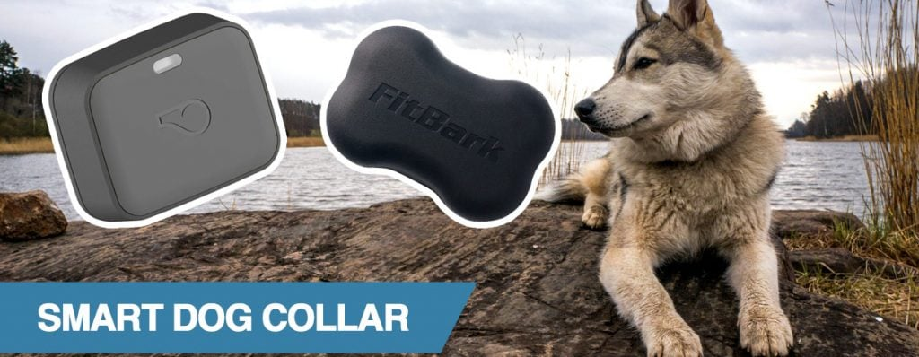 A guide to smart pet collars