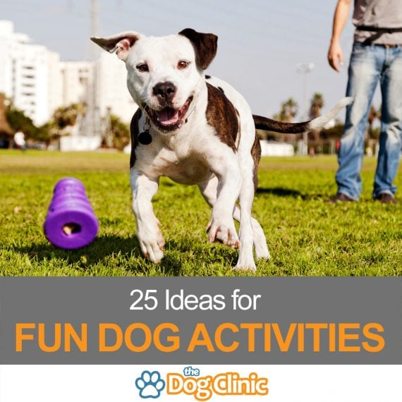 A guide to fun dog activities
