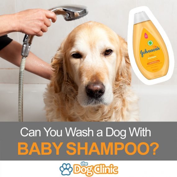 Can You Use Baby Shampoo On A Dog