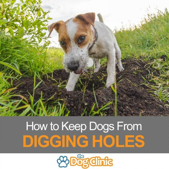 How to keep dogs from digging holes