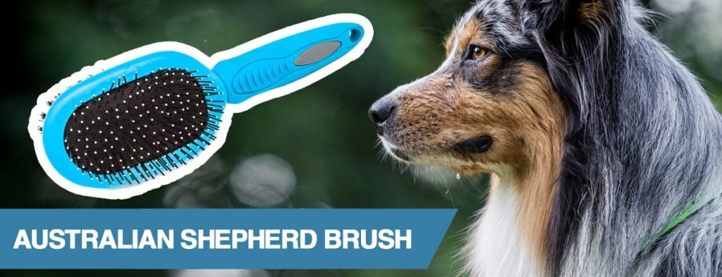 A guide to the best brush for Australian Shepherd dogs