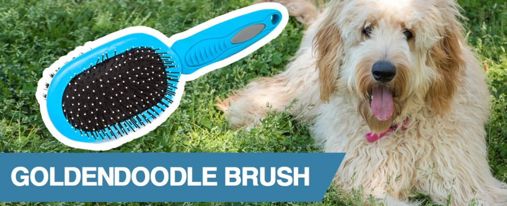 A guide to the best brush for Goldendoodle dogs