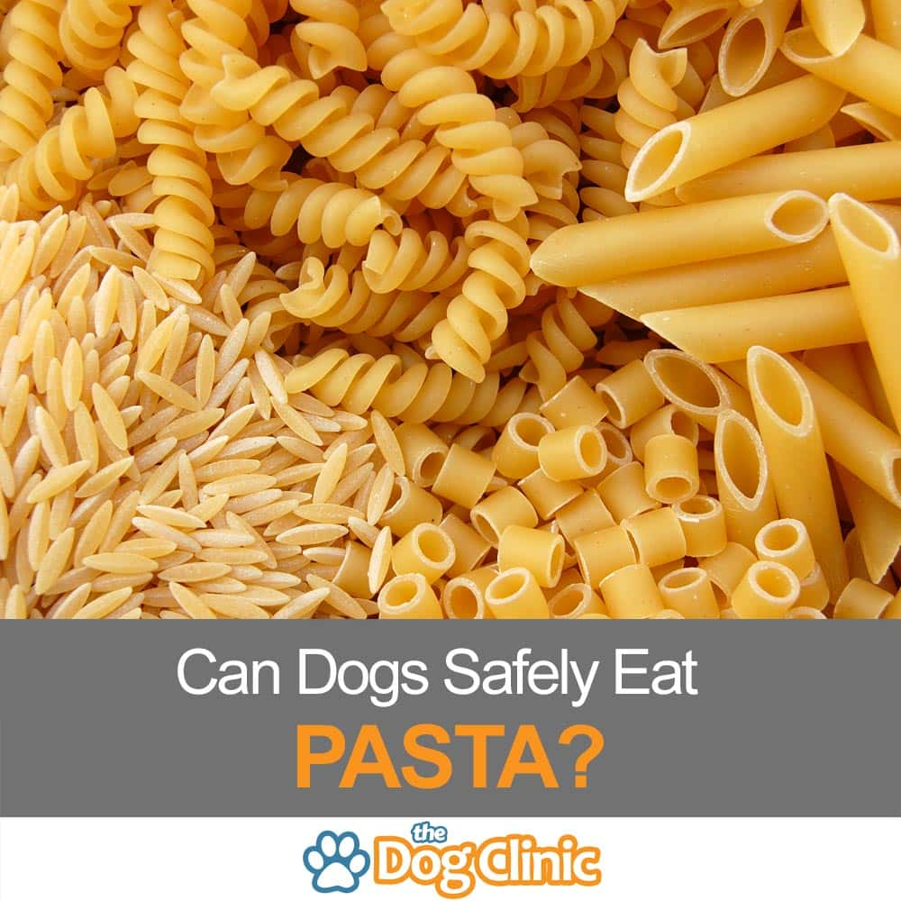Can Dogs Eat Pasta? (Including