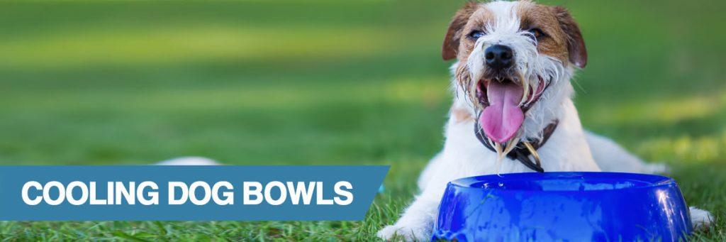 Dog near blue bowl