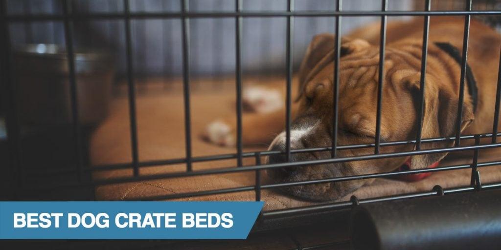 Our list of the best crate mats and pads for dogs