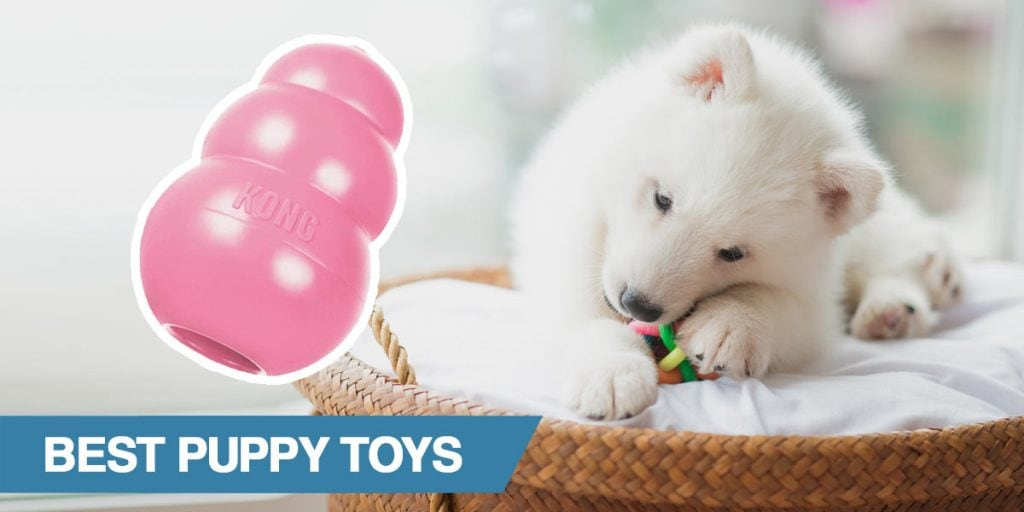 A guide to the best puppy toys