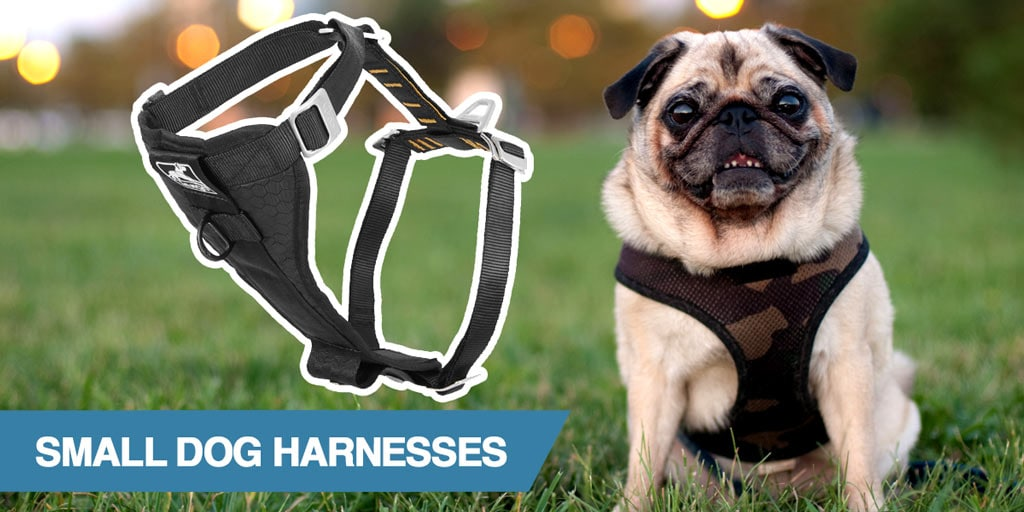 A guide to the best small dog harnesses