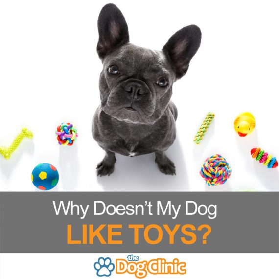 Dog with toys around him