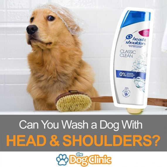 Dog near head and sholder shampoo